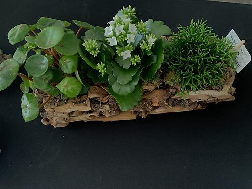 Stronk met vetplanten