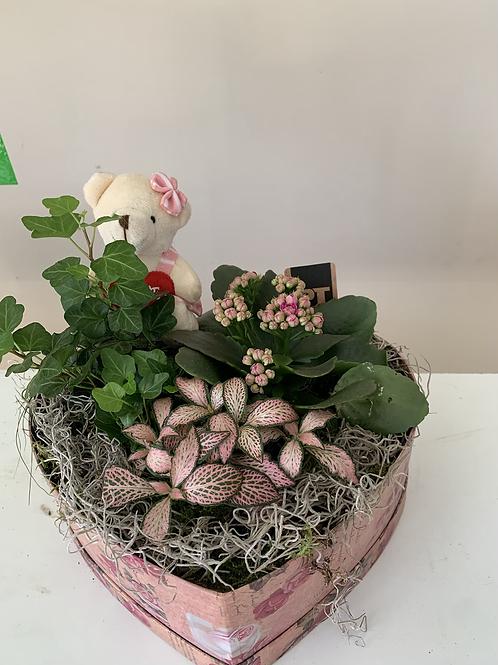 Plantenschaal hartje