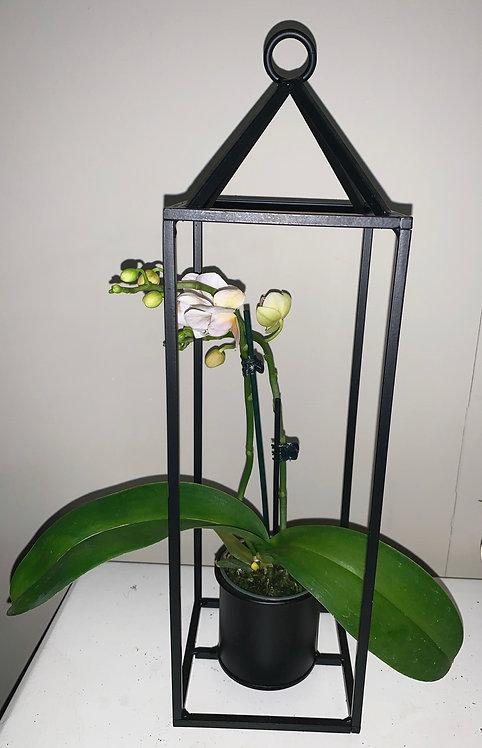 Orchidee in een huisje