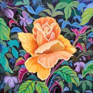 Biltmore Rose