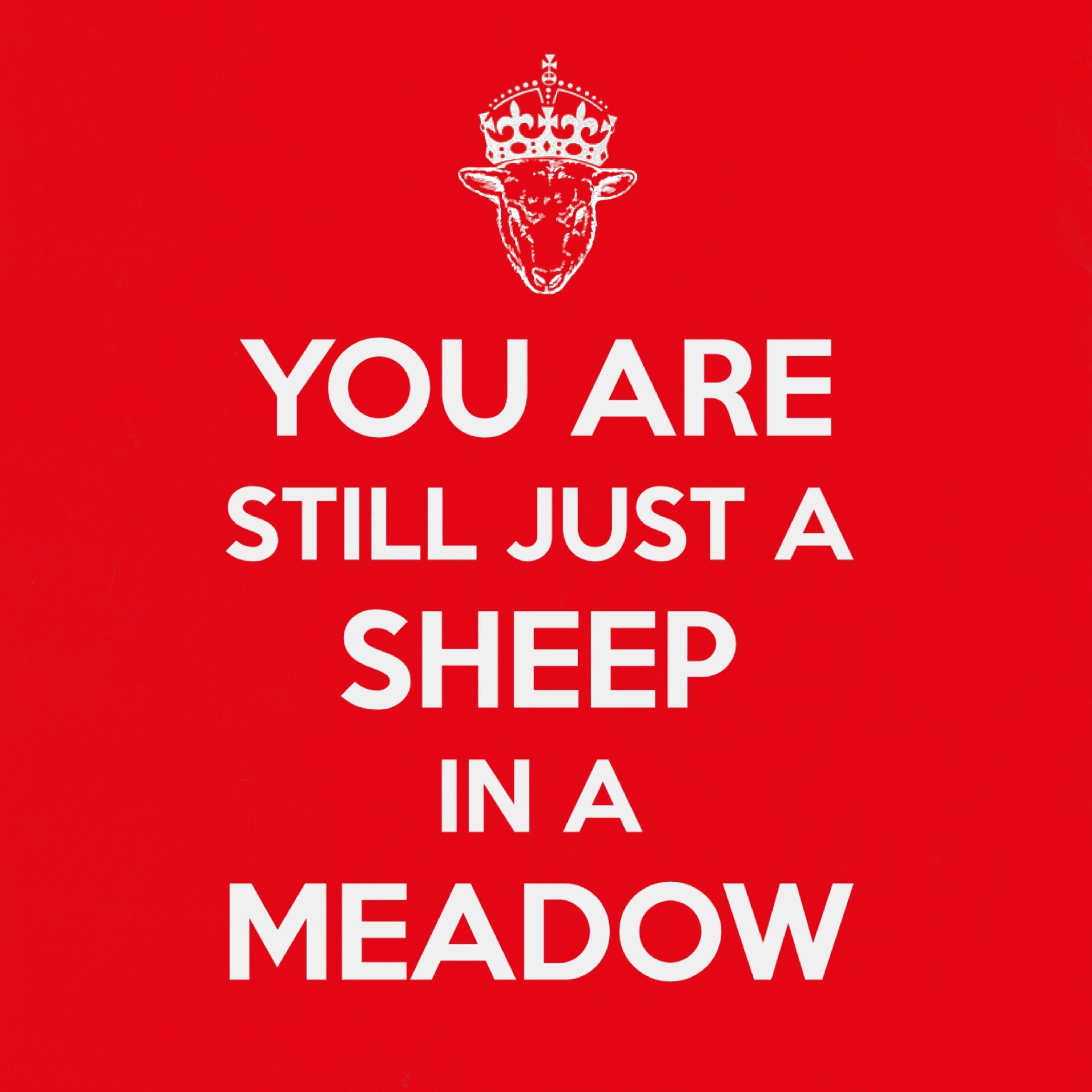 Tannenbaum - Just a sheep.jpg