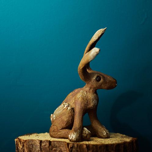 Hare No.41