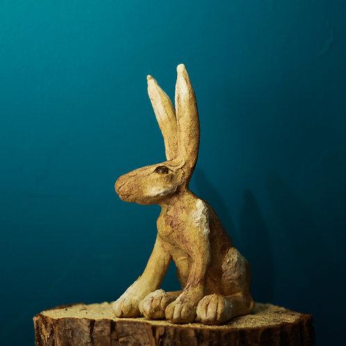 Hare No.37