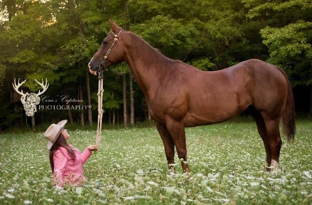 Ashley Quarter Horse photography