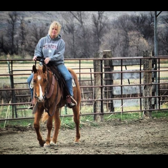 Ashley Quarter Horse colt starting