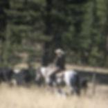 Laurel Horse.jpg