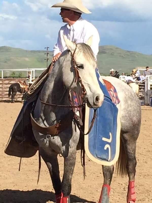 Ashley Quarter Horse Mare
