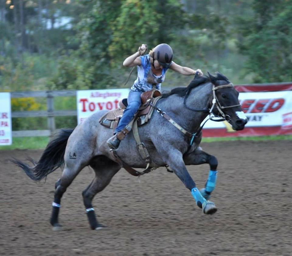 Ashley Quarter Horse Blue Roan