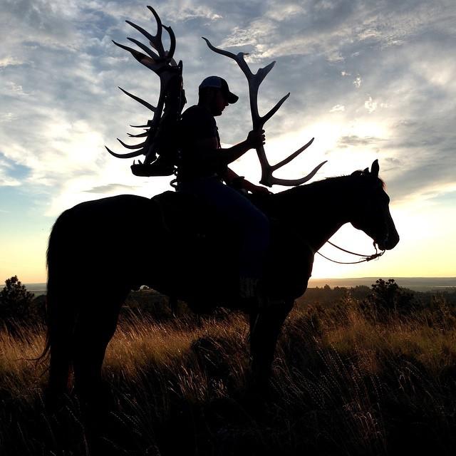 Ashley Quarter Horse elk hunting