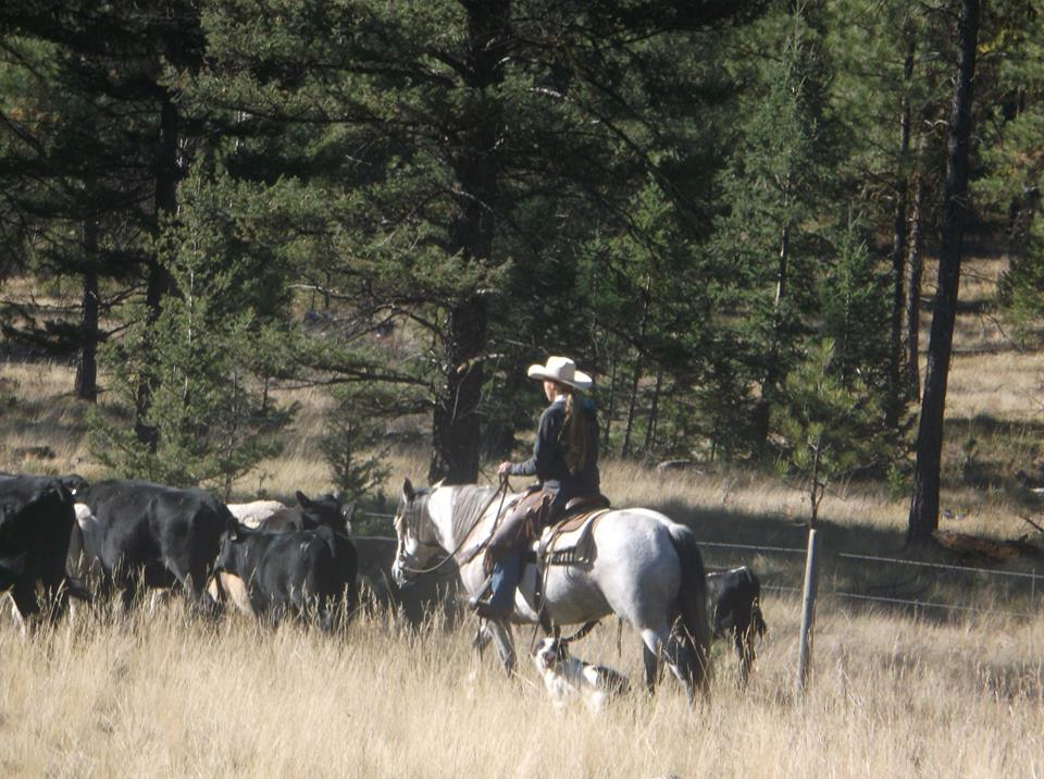 Ashley Quarter Horse trail ride