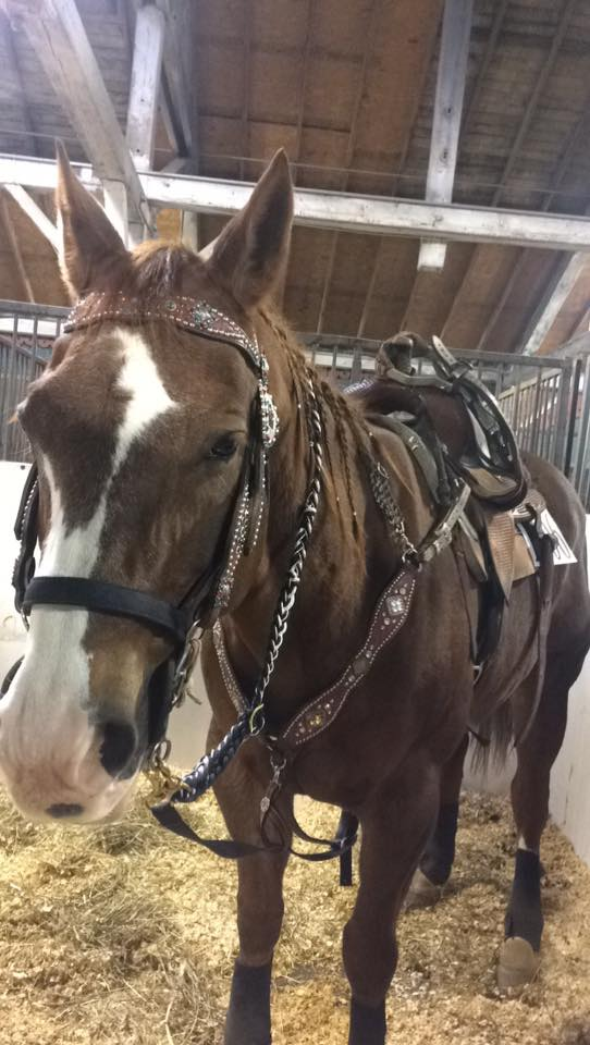Ashley Quarter Horse