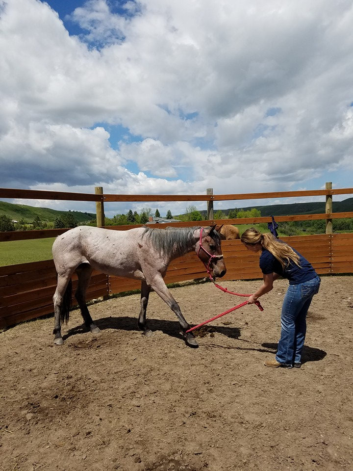 Ashley Quarter Horse ground work