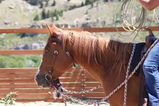 Ashley Quarter Horse snaffle