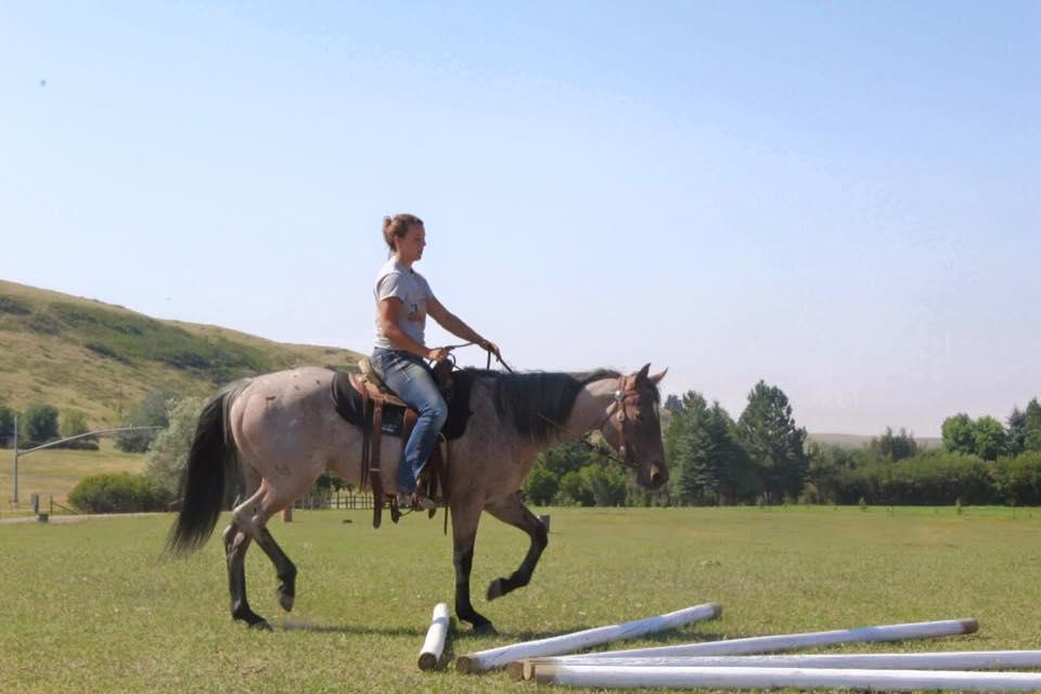 Ashley Quarter Horse bay roan