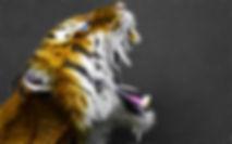 Glow - Tiger.jpg