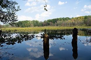Scotia - 10 Acre Pond