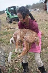 Farm Day 4