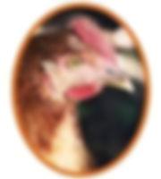 poule-rousse-1.jpg