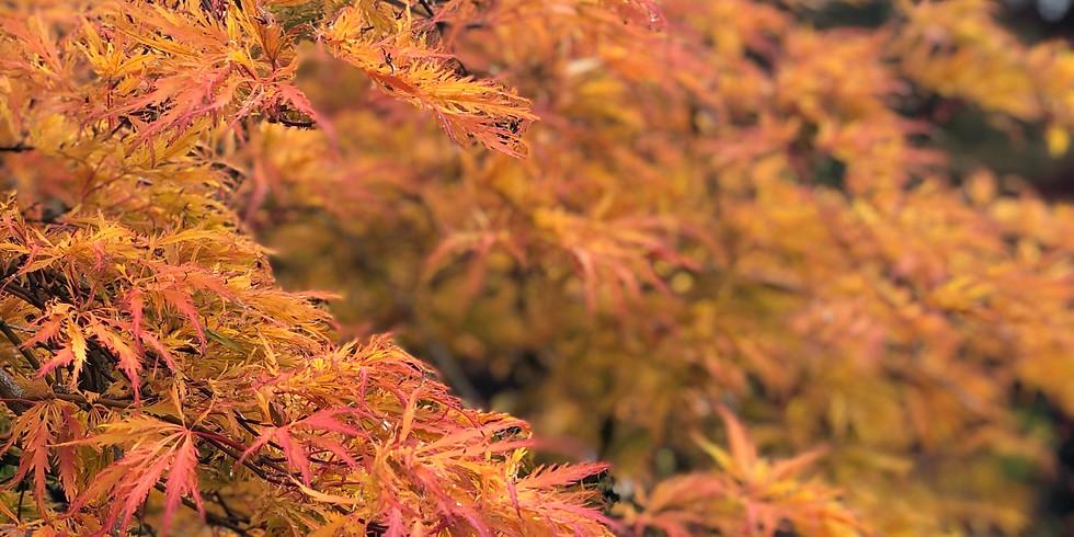 Autumn AcerFest