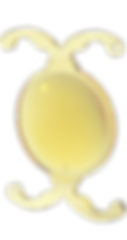Multifokale Linse, Vista Alpina Augenklinik