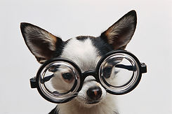 fehlsichtigkeiten, kurzsichtigkeit, myopie, weitsichtigkeit, hyperopie, alterssichtigkeit, hornhautverkrümmung, astigmatismus, vista alpina augenzentrum, dr. med. vandekerckhove,