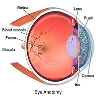 The eye, Vista Alpina Eye Center Valais