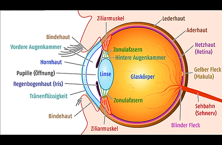 Aufbau des menschlichen Auges, Vista Alpina Augenklinik