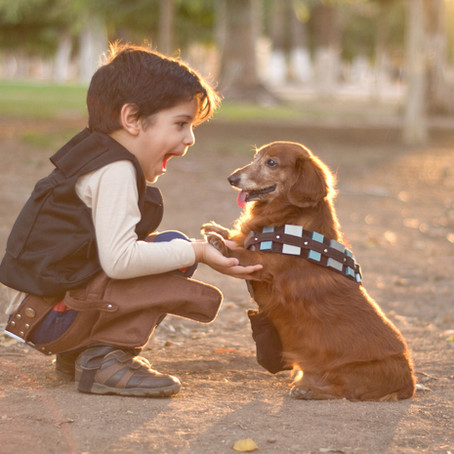 The Benefits Of Having A Pet While Your Child Grows Up By The Best Childcare In Macquarie Park
