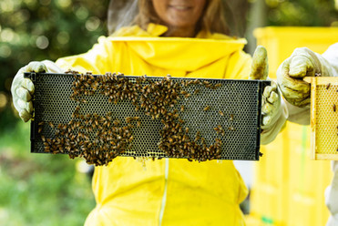 Honey-0061.jpg