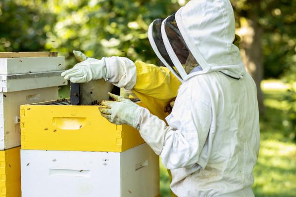 Honey-0063.jpg