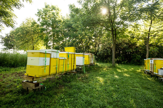Honey-0074.jpg