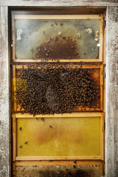 Honey-0051.jpg