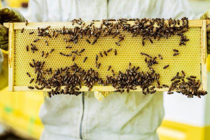 Honey-0060.jpg
