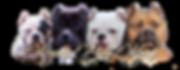 American Bully Kennel, Elkhart Indiana Bully, Ontario Canada Bully, Akron Ohio Bully, North Manchester Indiana Bully, Dogs, Canine, Royalty Bully Kennelz