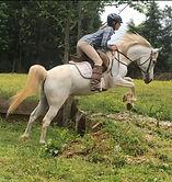 arabian white mare jumping