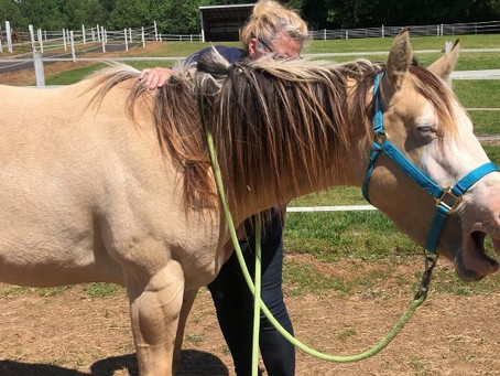 Yin Horsemanship for the Horse that Doesn't Like Grooming