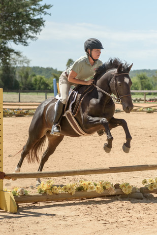 Equine Rescue and Rehabilitation
