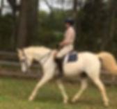 White Arabian mare for sale