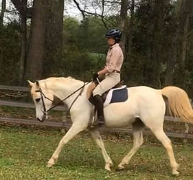 White Arabian mare for sale