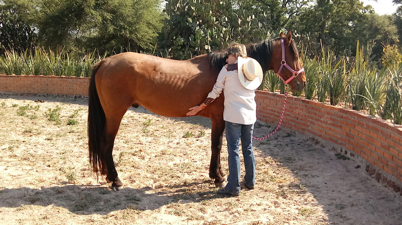 Equine Assisted Theraputic Services