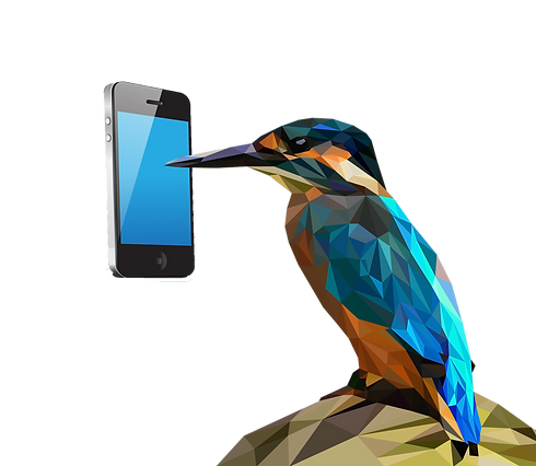 bird%20with%20phone_edited.png