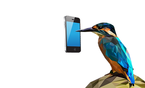 bird with phone.png