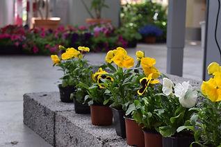 Pavasara puķes