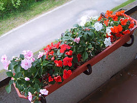 balkonam2.jpg