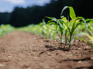 What is Pinch Row Compaction?
