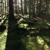 190110-Forêtlumineuse.JPG