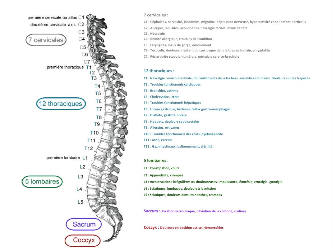 chiropracteur, osteopathe, kinésithérapeute, kiné, massage, chiropraxie, mal de dos, douleurs, massage, sciatique, lumbago, migraines, vertiges, prévention, femmes enceintes