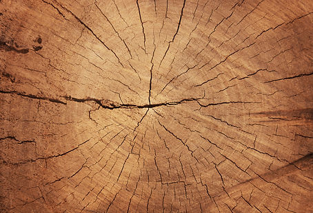 Wood grain texture of old tree stump wit