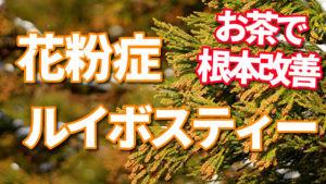 【ルイボスティー】花粉症を根本改善!