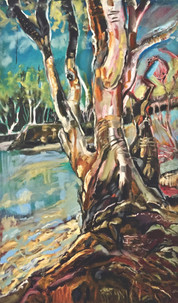 River gum at Wentworth